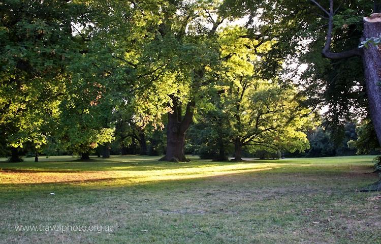 То ли парк, то ли лес